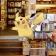 E se Pokémon Go ci portasse in libreria?