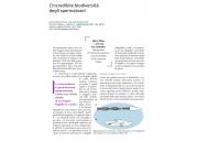 L'incredibile biodiversità degli spermatozoi